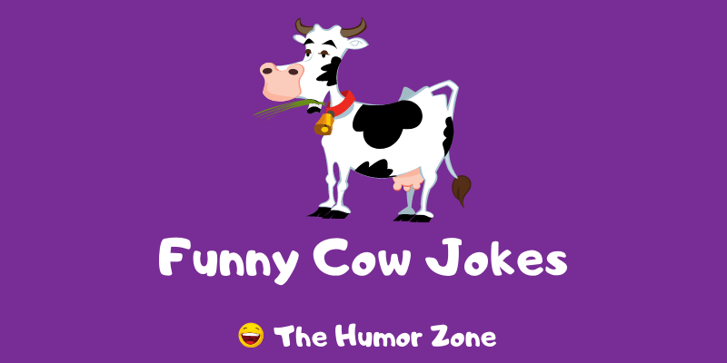Featured image for a page of funny cow jokes and puns.
