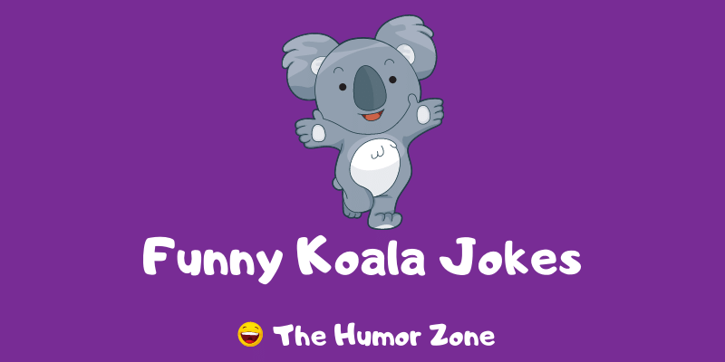 Featured image for a page of funny koala jokes and puns.