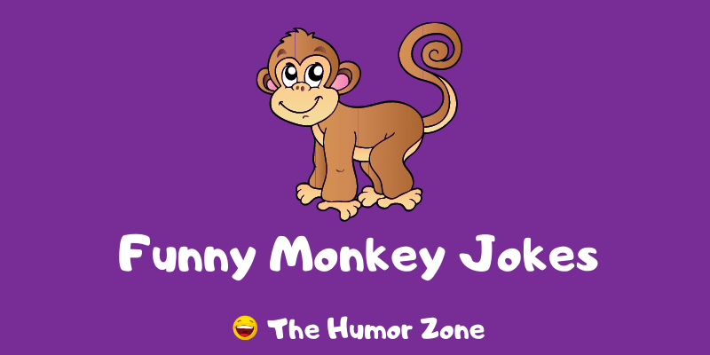 Featured image for a page of funny monkey jokes and puns.